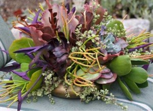 Succulents mix well with collections of deep hues