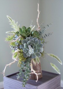 Succulents and Manzanita